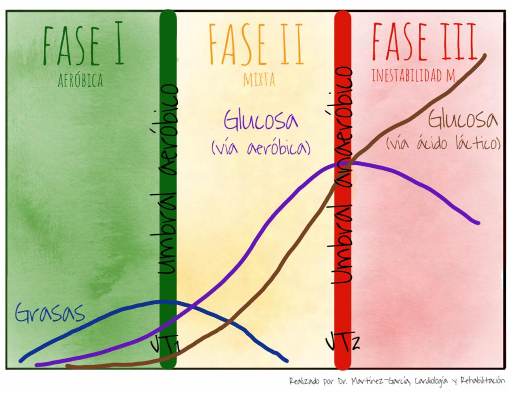 modelo trifásico metabolismo energético Skinner McLellan